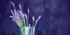 loose leaf lavender tea