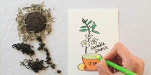 tea leaf plant