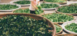 tea leaf uses